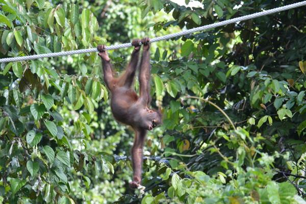 マレーシア・ボルネオ島の環境保全に貢献